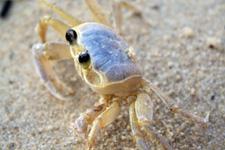 angra_crab.jpg