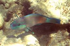 fish_001.jpg